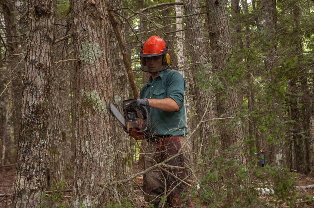 "Dale Prest cutting wood from Community Forests International's 705-acre carbon forest property near Sussex NB"" (photo credit: Zach Melanson)"