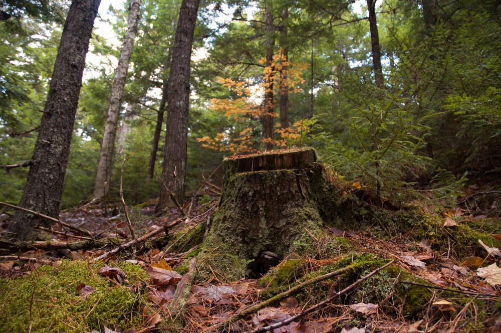 "Community Forests International 705 acre woodlot near Sussex has stored carbon to the tune of $300,000, while still being actively managed"" (photo credit: Zach Melanson)"